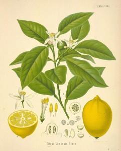 Hameiri Family Lemon apartment